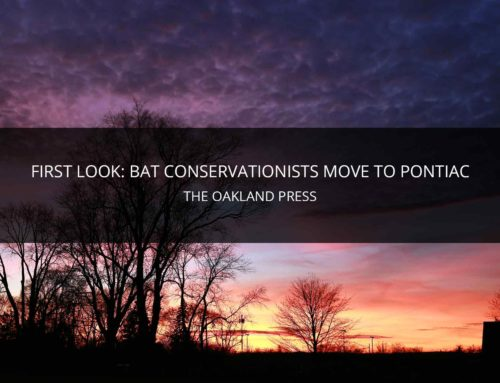 FIRST LOOK: ORGANIZATION FOR BAT CONSERVATION MOVES TO PONTIAC